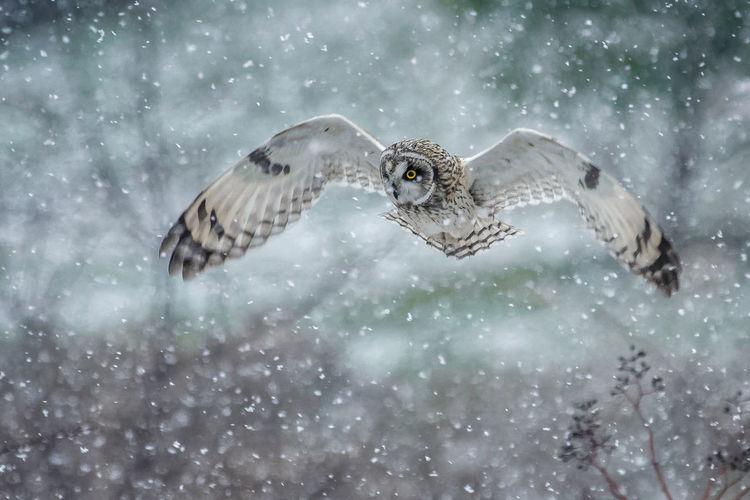 Bird flying over snow