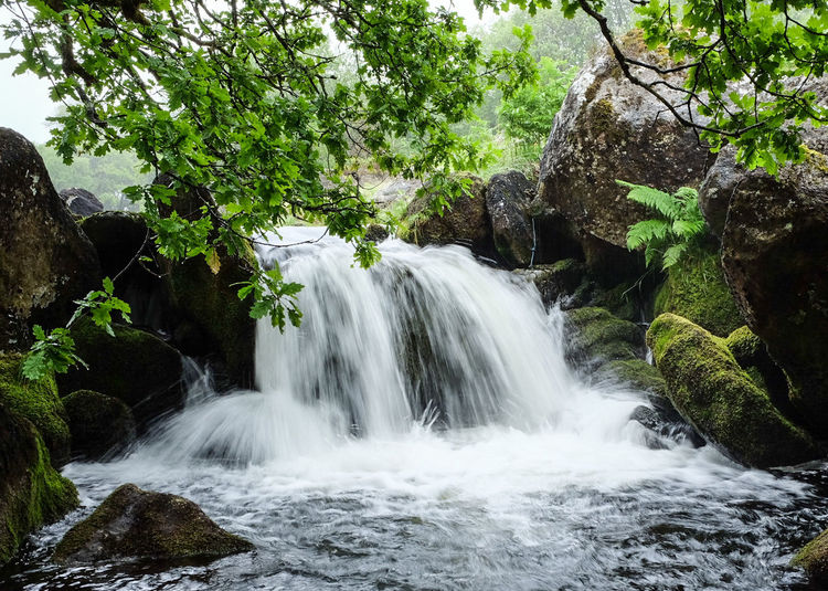 Nature No People Tree Beauty In Nature Scenics Water Tranquility Waterfall Outdoors Motion Day Growth Long Exposure Dartmoor