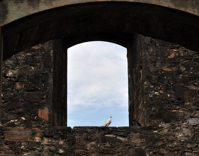 Low angle of pigeon resting in window frame of historical building