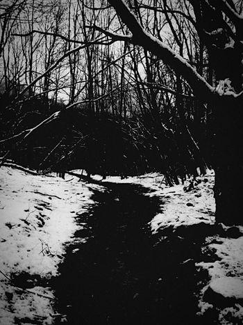 Snow Appennino Nature Wildlife Darkness And Light Blackandwhite
