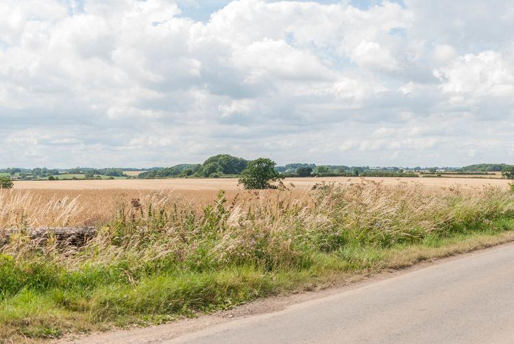 English hay