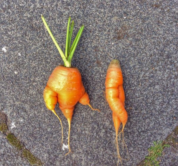 Punk- & Lady-Carrot ❤️ On A Health Kick Colors Vegetarian Food In My Garden Misfits Nature Stand Out From The Crowd