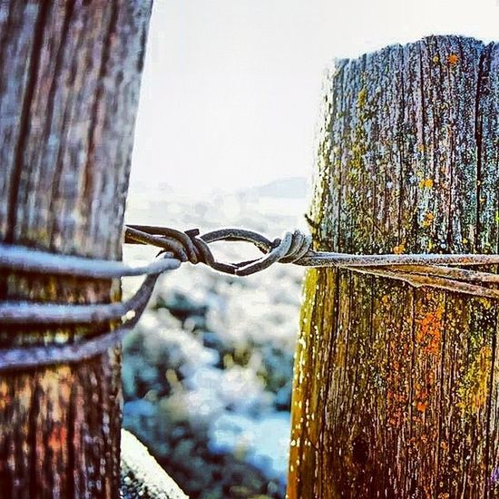 Frost Yellowstonenationalpark Lamarvalley Barbwire fencepost sunrise