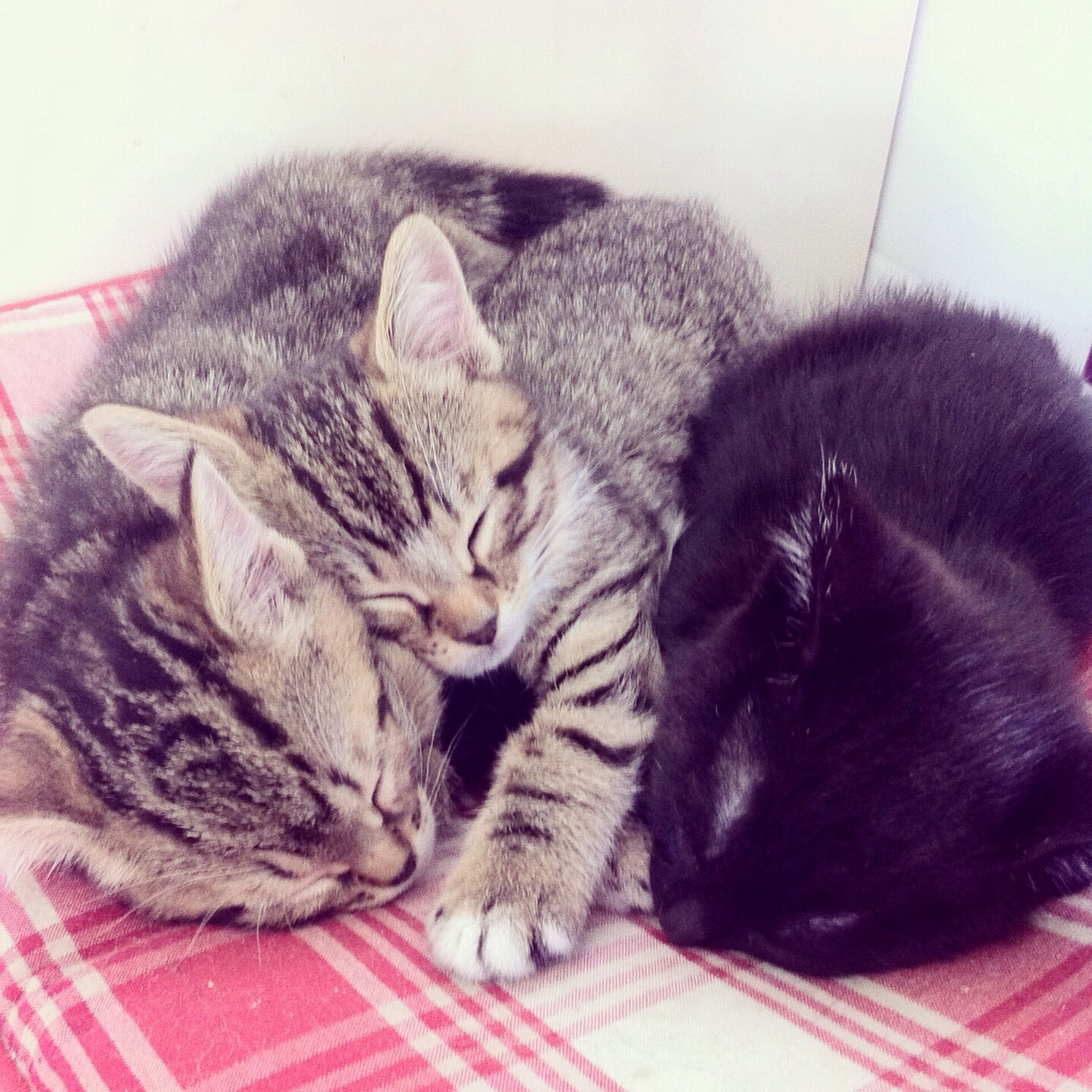 pets, domestic animals, animal themes, domestic cat, mammal, cat, one animal, indoors, relaxation, feline, sleeping, resting, lying down, whisker, two animals, eyes closed, close-up, togetherness, comfortable, high angle view