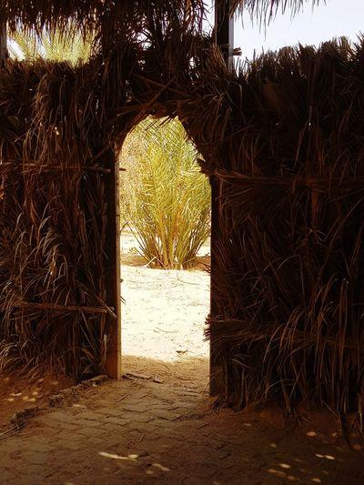 Tozeur, Tunisia Tunisia <3 Tunisia❤ Tunisie Terre D'accueil Tozeur Tunisia_with_love Tunisia Tunisie Palm Tree El Faouar Tunisie El Faouar Tunisia Palm Palm Leaf Palmtrees Plams🌴 Kebilli Tunisia❤ Kebili Summer Exploratorium