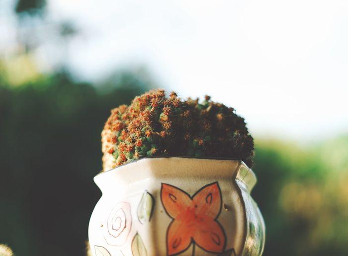 cactus Human Hand Clown Flower Human Face Headshot Anthropomorphic Face Human Representation Close-up