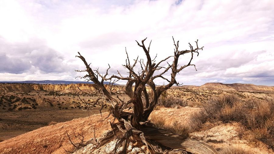 Landscape Desert Landscape White Mesa Desert Exploring Nature Dead Tree Rock Formations Rocks And Minerals