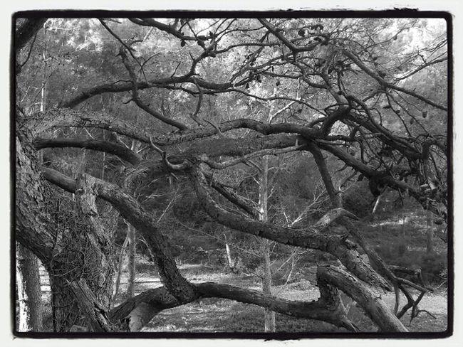 Eye Em Nature Lover Holydays 2014 Black & White Taking Photos