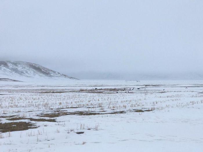 Cold Temperature Landscape Environment Scenics - Nature Winter Snow Frozen Ice