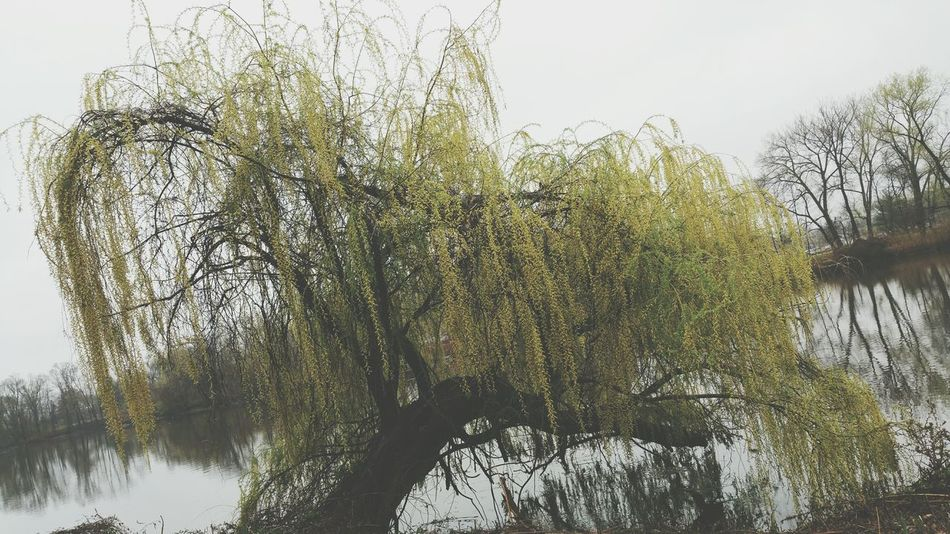 Erie. Erie River Photography Trees Angle Beauty Greentree