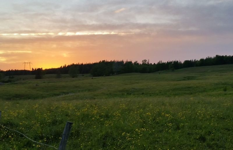 Scenic view of grassy field against sky at sunset