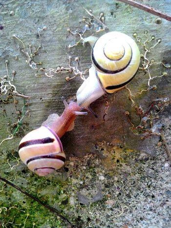 Snail High Angle View Day One Animal Animal Themes Gastropod Animals In The Wild Outdoors No People Nature Close-up Animals In The Wild Tortoise Shell Animal Wildlife Italian Alps Village Montagnes 🌲🍃 Outdoors Photograpghy  Italian Alps Alps Italy
