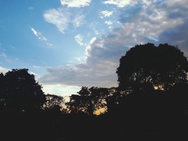Silhouette Tree Sky Cloud - Sky No People Outdoors Low Angle View