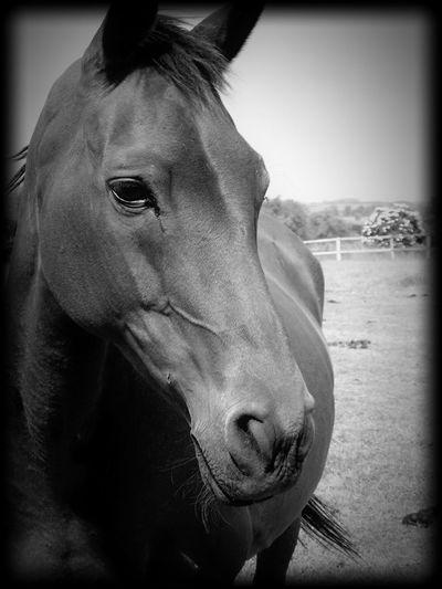 Havane Ma Jument💜 Love Horses Baby ❤ Cute💙.