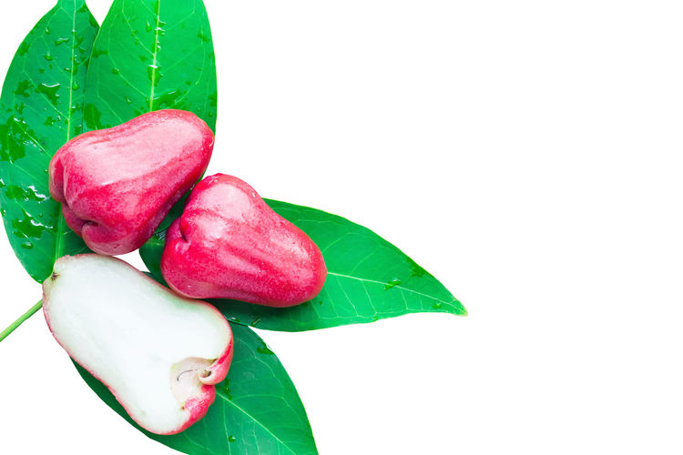 Rose apples or chomphu on green leaves isolated on white clipping path Isolated Beauty In Nature Chomphu Clipping Path Close-up Copy Space Cut Out Food Food And Drink Freshness Fruit Green Color Indoors  Leaf Leaves Nature No People Plant Plant Part Red Ripe Rose Apples Studio Shot Sweet White Background