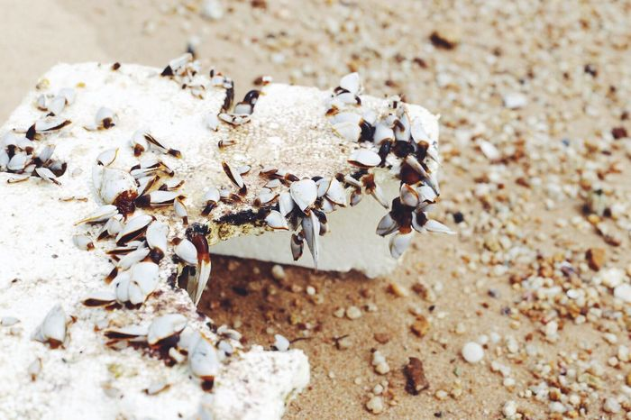 Waterpollution Pollution Shells