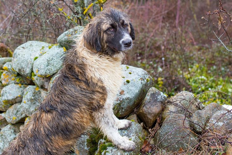 Man's best friend Dog Stone Wall Countryside Mans Best Friend