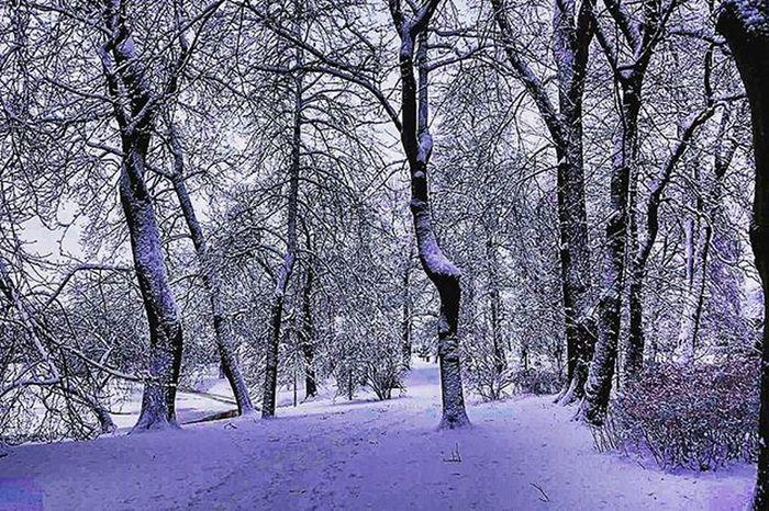 📷❄🌲🌲 Snowlandscape Wood Trees Snow Snowlight Sherwood Coldweather Winter Followme Tagsforlikes Likes Beautiful Photo Beautifulday Nature Sherwoodforest Gothenburg Sweden Landscape Perfect @awesome_pixels @exaperture @gothenburg_sweden
