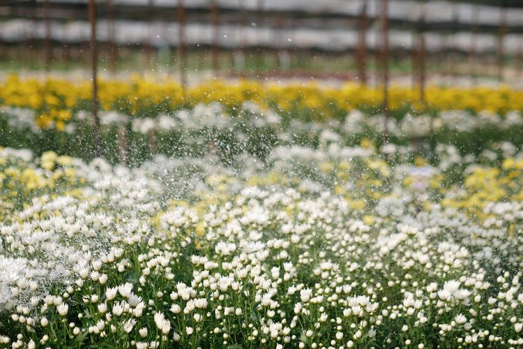 Watering flower garden. Farm Agriculture Flower Plant Growth Freshness Beauty In Nature Nature Field Water Springtime