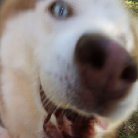 Close-up One Animal Dog Pets My Dog ;D