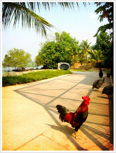Bird Chicken