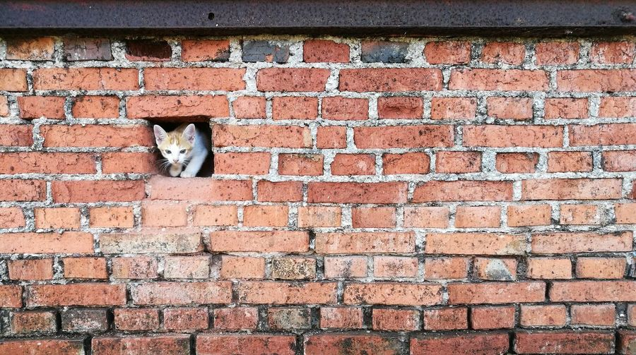 Cat in the wall Brick WallThe Street Photographer - 2017 EyeEm Awards Day Outdoors No People Architecture Domestic Cat Built Structure Full Frame Backgrounds Red Animal Themes A New Beginning