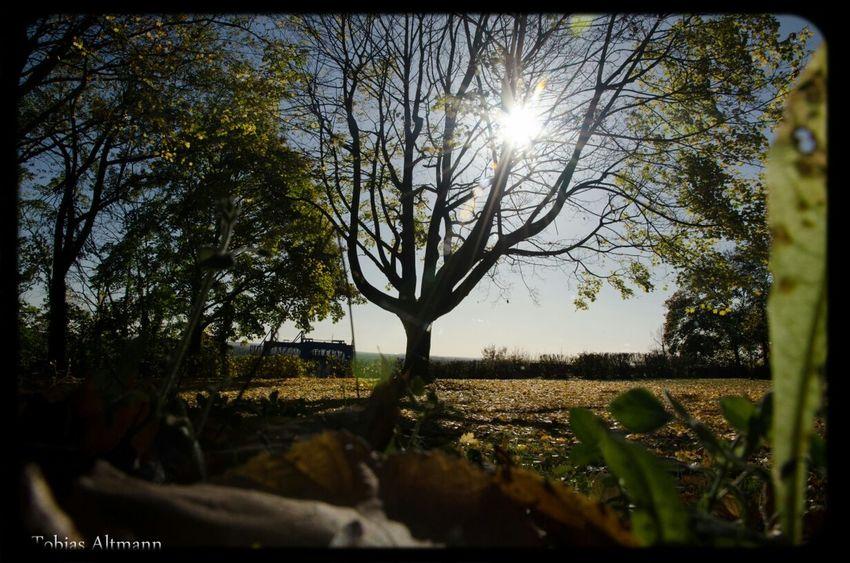 Stadtpark Oktober 2012 Landscape Wood Park