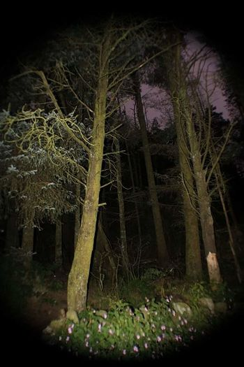 Tree Mystery Night Spooky No People Outdoors Illuminated Nature Sky Night Forest EyeEm Best Shots - Nature Beauty In Nature Forest