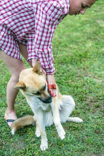 Woman brushing dog while standing on field