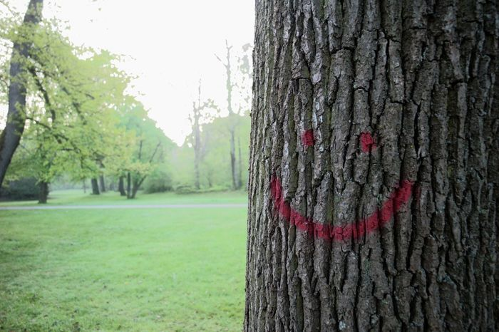 A tree with a smile Beauty In Nature Close-up Day Grafitti Grass Growth Marking Mountain Nature No People Outdoors Sky Smile Textured  Tranquility Tree Tree Trunk
