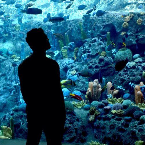 Orlando Seaworld (: Aquarium
