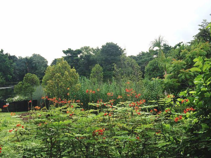 Oasis Park UNESCO World Heritage Site Singapore Singapore Botanic Garden