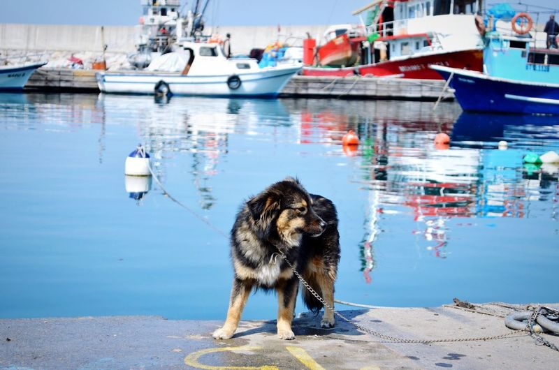 Dog standing on pier at harbor