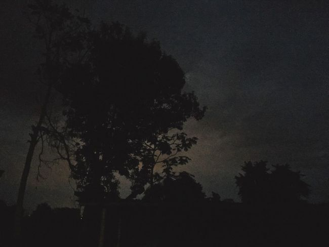Outdoors Night Beauty In Nature Nature Silhouette Growth Sky Shape Landscape Nature In The Night Nature's Diversities