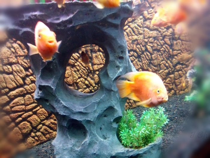 Learn & Shoot: SimplicityEyem Fish Aquarium Life Fishes Beautiful Giving Funny Faces Expressions Eyemphotography Eye4photography  Clicked By Me Xperiaphotography EyeEm Gallery Fishface Low Quality Photo Eyem Gallery