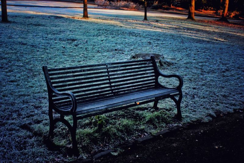Winter in the park ❄️❄️ Bench Empty Absence Outdoors Relaxation No People Seat Tranquility Day Nature