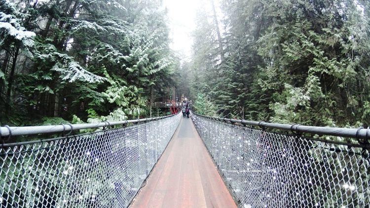 Nature Suspension Bridge