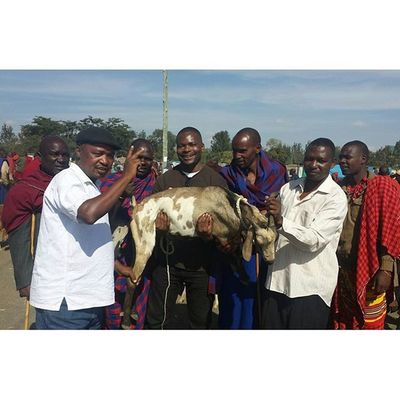 We needed a goat for my cousin's wedding, so my uncles took me to the MaasaiMarket ... after some intense negotiations on price I selected this goat. Now we will go home and slaughter it! Maasai MaasaiMarket Tanzania MyAfricanVacation Backtomyroots