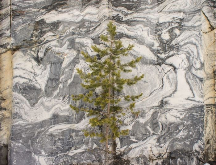 Marble wall Art And Craft Full Frame Pattern Close-up Backgrounds No People Tree Nature Outdoors Day Wall Canyon
