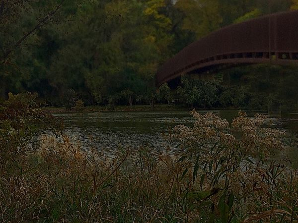 Getting dark Autumn🍁🍁🍁 Daylight Daylife River Life The Fox River At Montgomery, Illinois Fox River Trees Autumn Colors Daytime Bridge Trees And Sky Sky Landscape Landscape_Collection Miles Away Oswego, IL The Secret Spaces