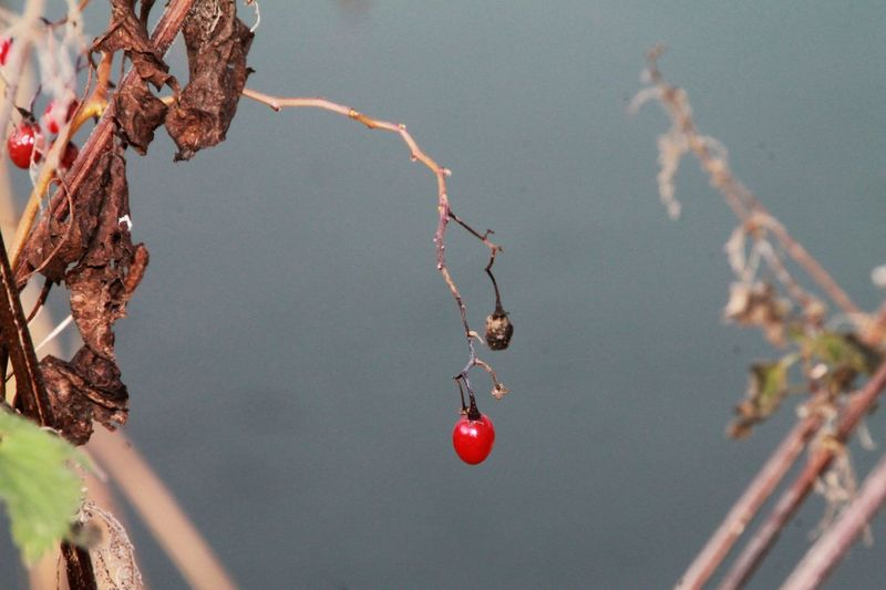 Berry Outdoors Berry Fruit Berrycollection Nature Berry In Winter Lonesomeness It S Cold Outside Hanging Out