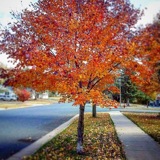 Fall Leaves Wisconsin Eauclaire Taramae Beautiful Red Trees