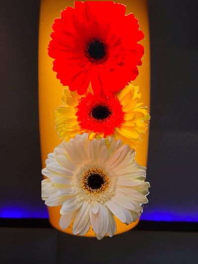 Vancouver BC Flowers Margarites Minimalism Flowers In A Vase