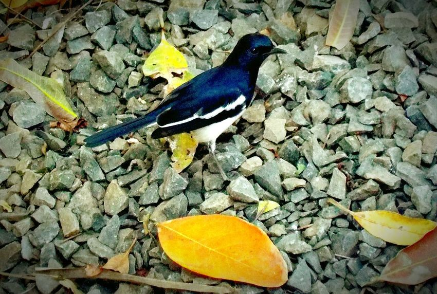 Bird Photography Birds_collection Birds Of EyeEm  Birds🐦⛅ Birds Nature Beautiful Colorful Photography Hello World Nature Photography New On Eyeem Photos Around You Photo Best  2016 Best On EyeEm First Eyeem Photo EyeEm Best Shots Nature On Your Doorstep Nature_collection Check This Out Click