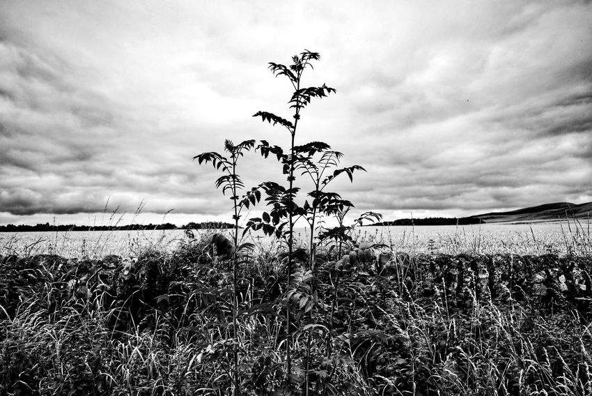 Nature Sky Cloud - Sky Plant Growth Outdoors No People Beauty In Nature Scenics Water Landscape Day Tranquility Scotland Pentland Hills Nature Tree Grey My Year My View Monochrome Photography Brown
