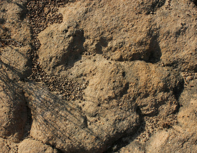 Dry Ground Relief Sand Surface Textured  Textures And Surfaces