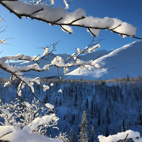 Winter Cold Temperature Snow Nature Beauty In Nature White Color Day Weather Mountain No People Blue Tree Outdoors Sky Frozen Scenics Tranquility Branch Landscape Tranquil Scene