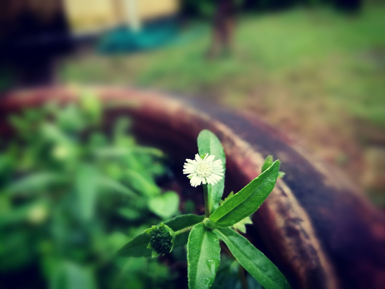 green color, leaf, growth, nature, beauty in nature, flower, plant, fragility, focus on foreground, day, outdoors, close-up, freshness, no people, flower head