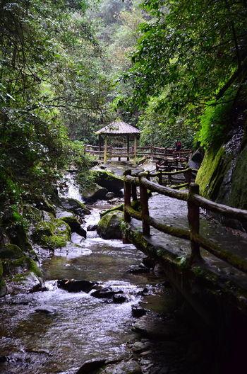 Footbridge over stream in forest