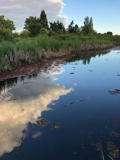 Water Plant Tree Sky Reflection Tranquility Nature